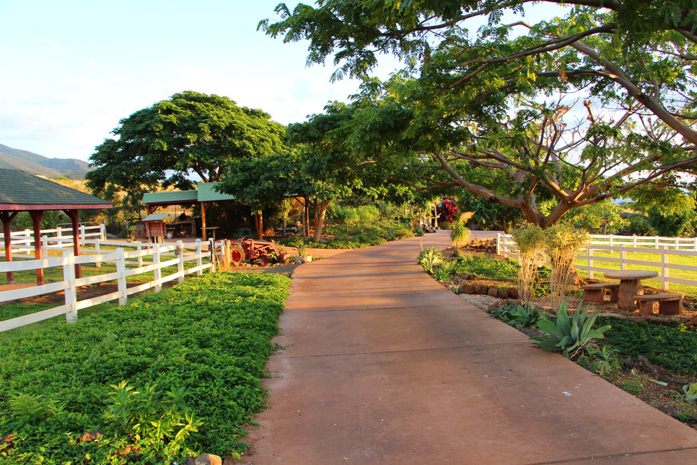 Maui-Lahaina-Animal-Farm-entrance_7598.jpg