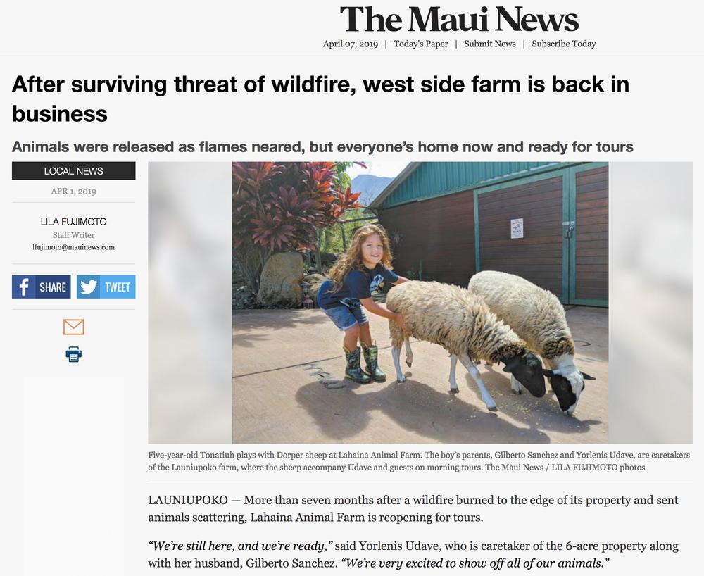 LAF-Maui News-3.png