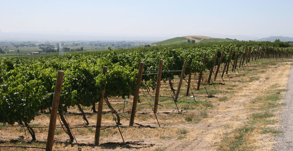 Boushey-Vineyard.jpg