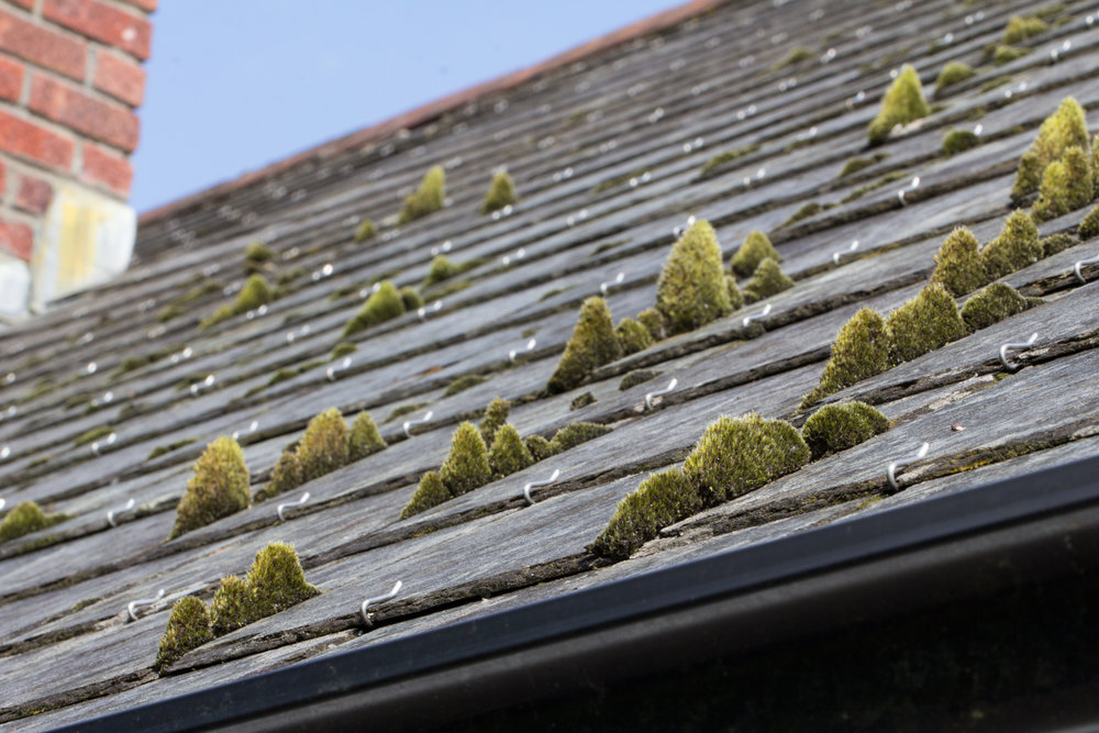 moss-on-roof.jpg