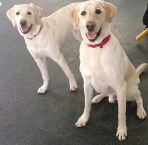 Image of dogs, Belle and Cooper.