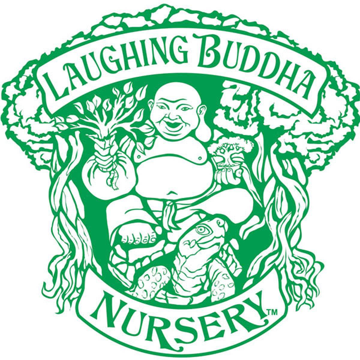 Laughing Buddha Nursery