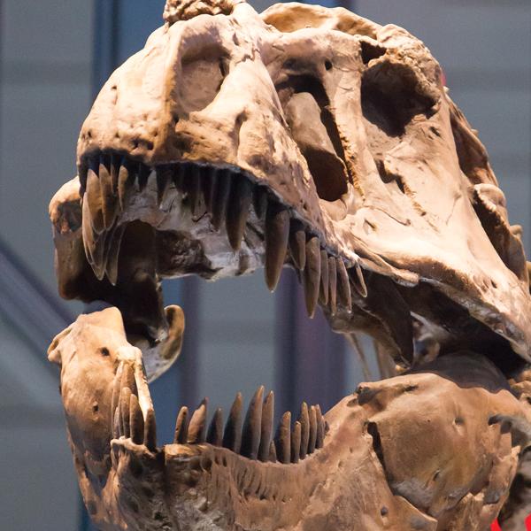 1 bb t rex scull.jpg