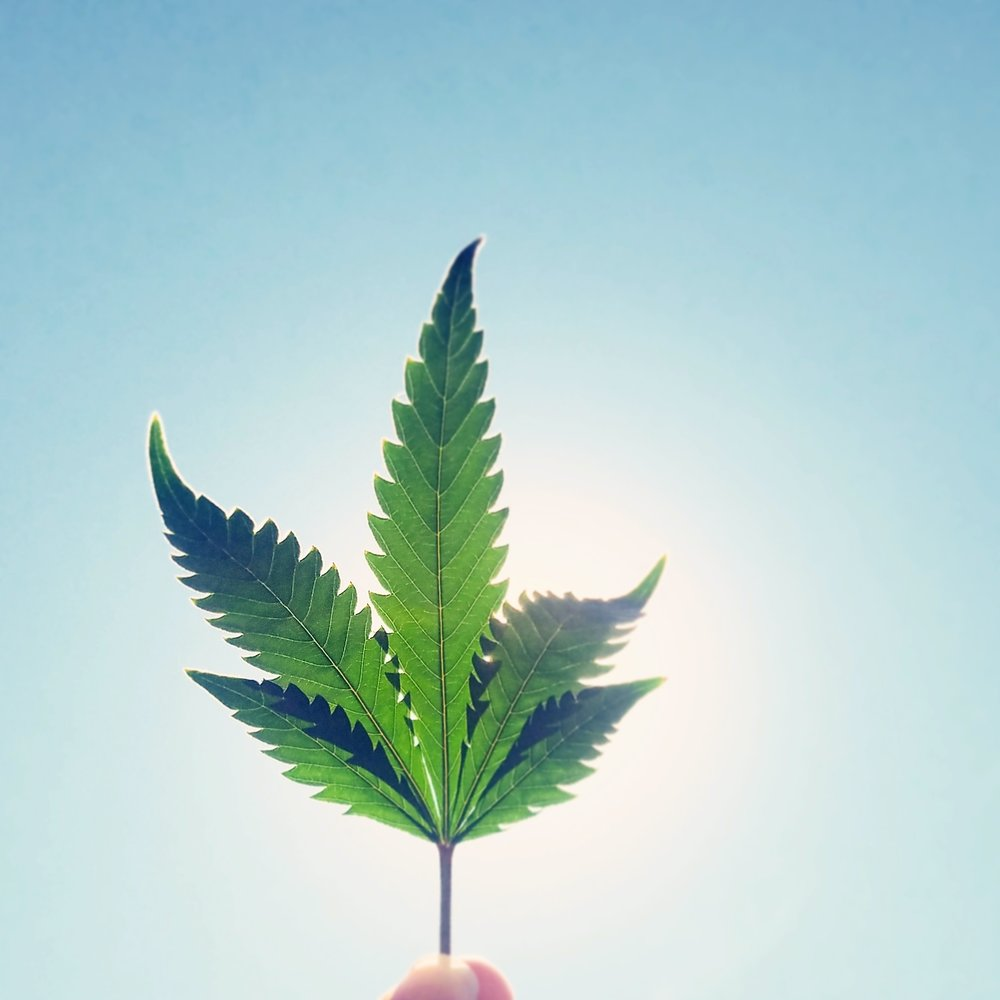 What is CBD? - CBD or Cannabidiol is a chemical compound found in cannabis. It makes up a large percentage of the hemp plant's extract. Studies have shown that CBD has significant health benefits and does not produce psychoactive effects. While further research is required to better understand the impact of CBD, current medicinal claims include anti-inflammation, neuroprotectancy and analgesic (painkiller) benefits, to name a few.