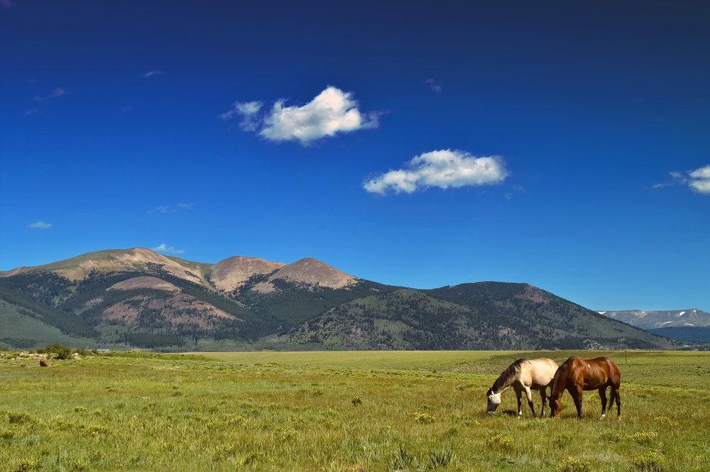 bigstock-Horses-Grazing-In-Field-With-M-2963036.jpg