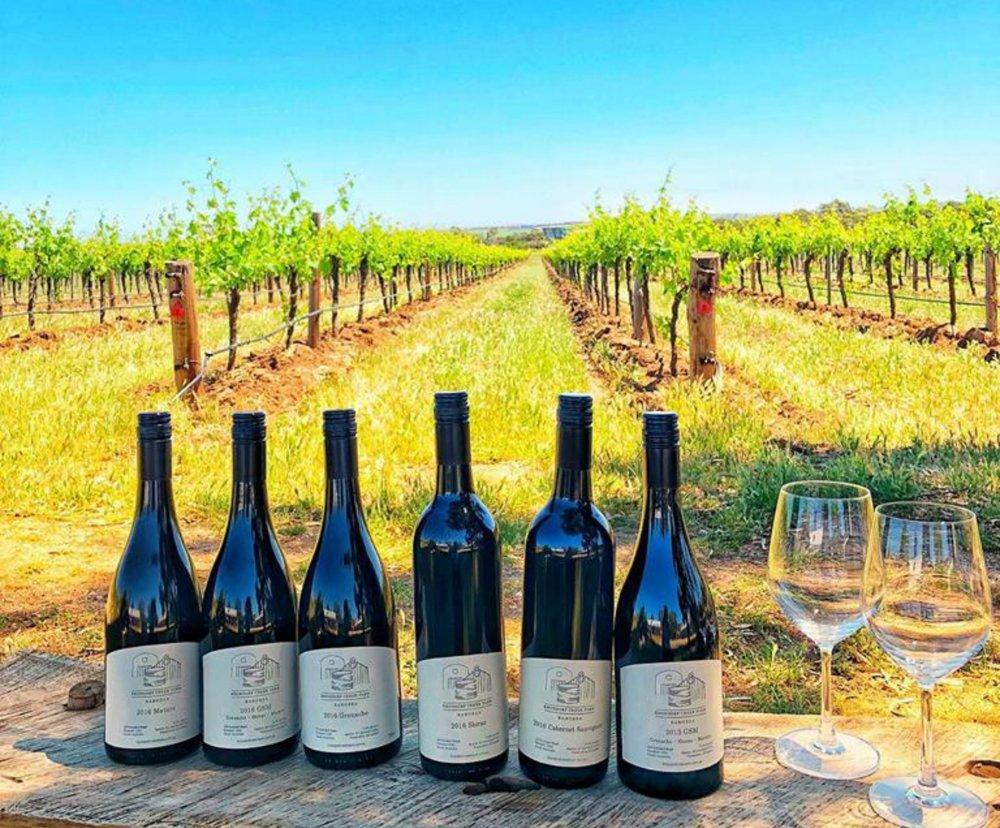 wines in vineyard atdw.jpg