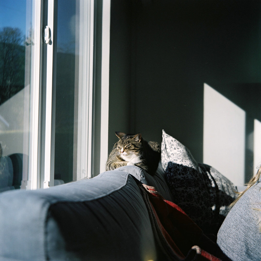 Cat on the sofa before she disappeared, North Vancouver © Tanya Clarke 2018