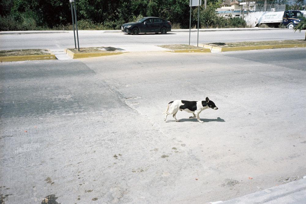 Urban dog, Tulum © Tanya Clarke 2018