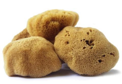 natural_sponges.jpg