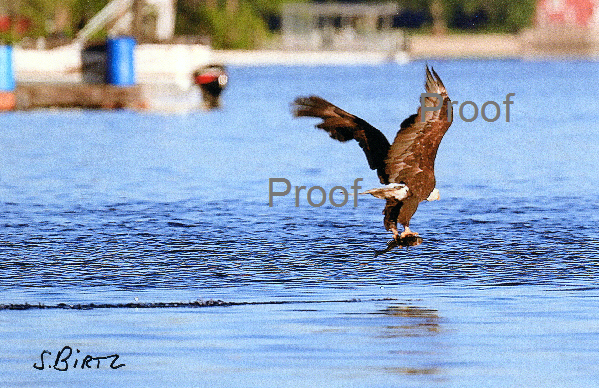 5. Eagle with Fish