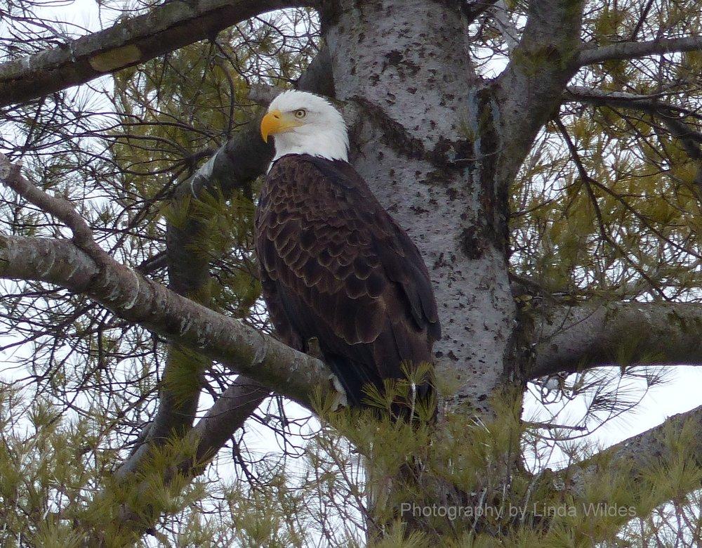 Eagle1.2014.05.11.LW.B.jpg