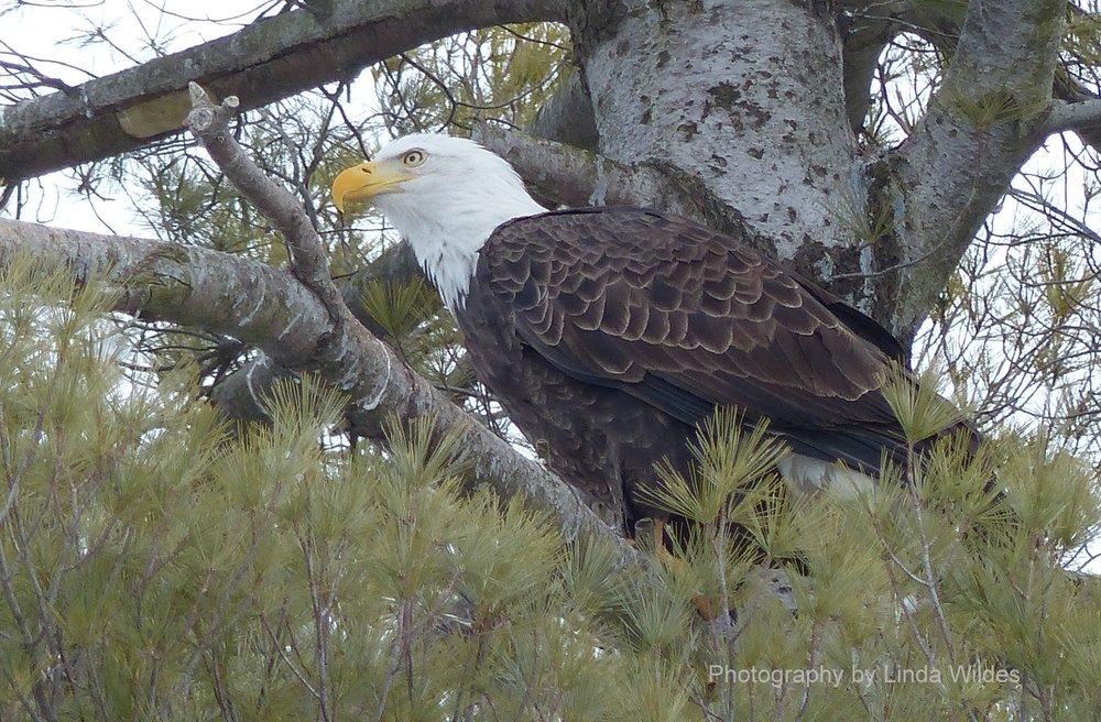 Eagle2.2014.05.11.LW.B.jpg