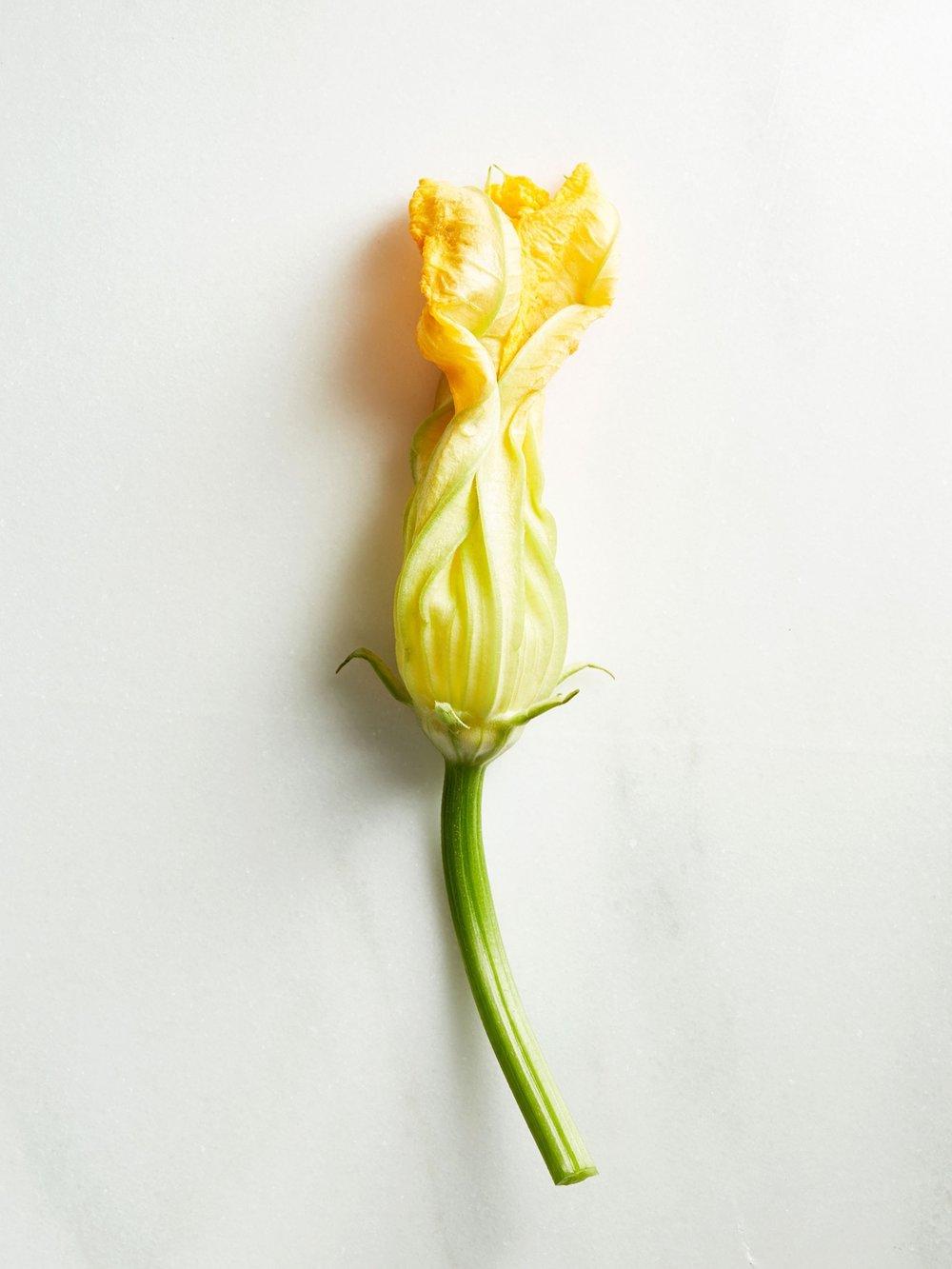 Edible_Flowers_Squash_Blossom_0224.jpg