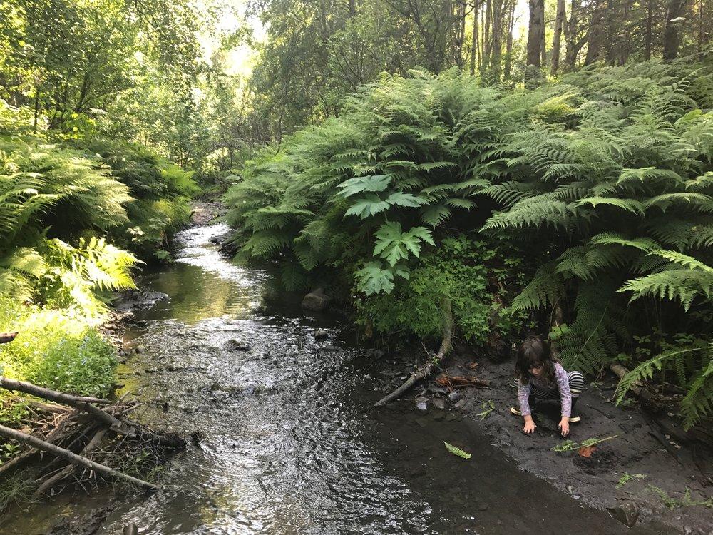 Nature Camp -