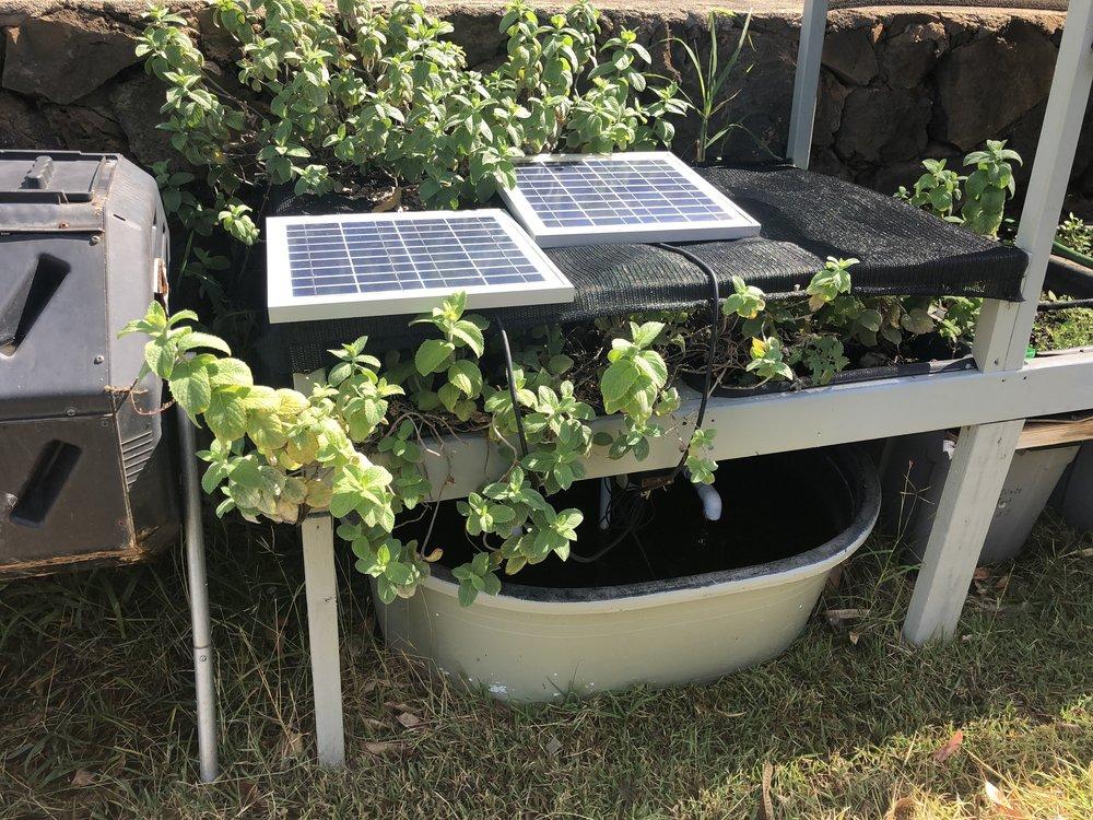 How easy is solar powered Aquaponics -