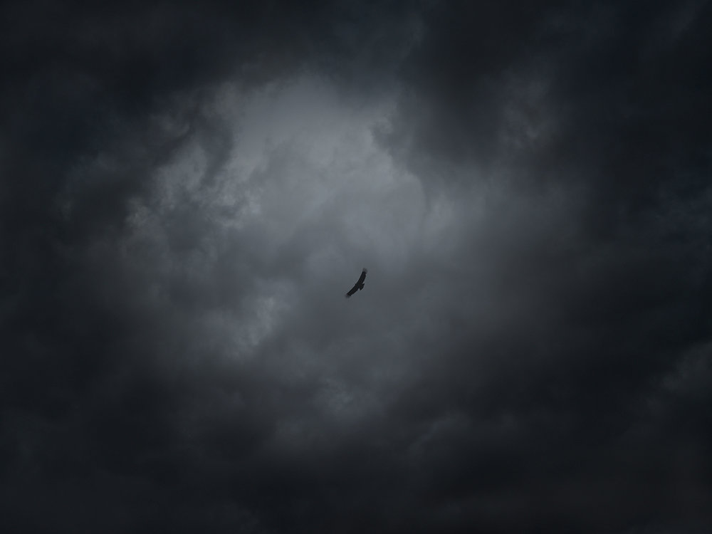 Lone condor