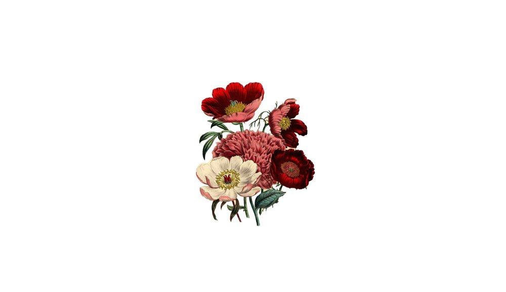peonyflowers BORDERS.JPG