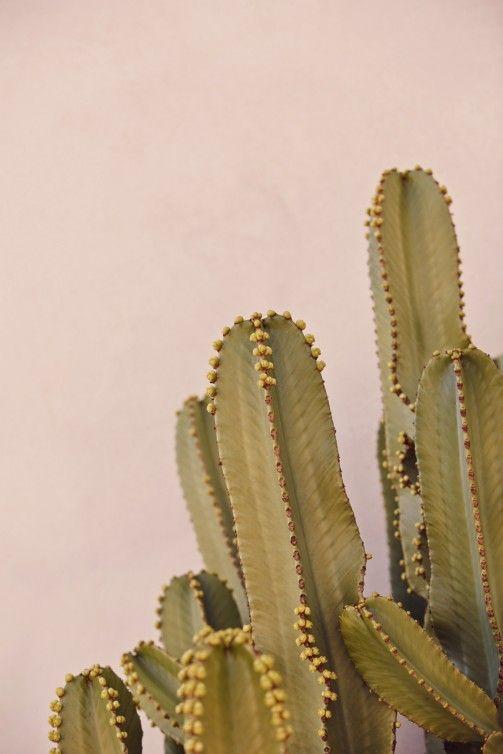 blush-kaki-trend-decor-kc-6.jpg