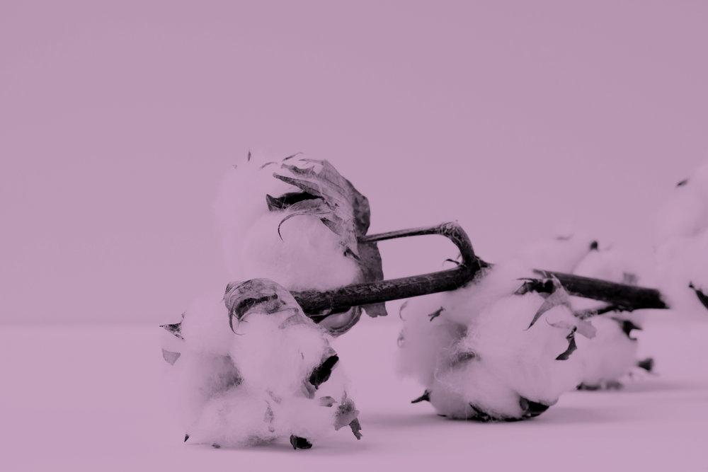 cotton marianne-krohn-703821-unsplash.jpg