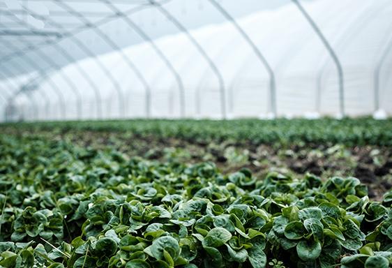 Greenhouse Nurseries -