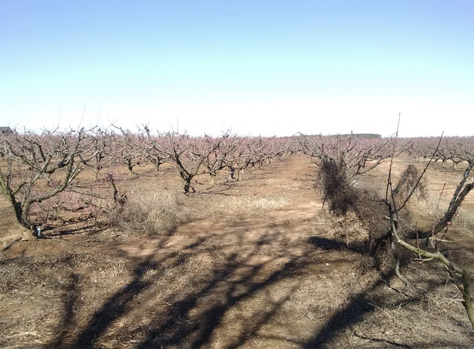 AGVALUE_orchards_5555.jpg