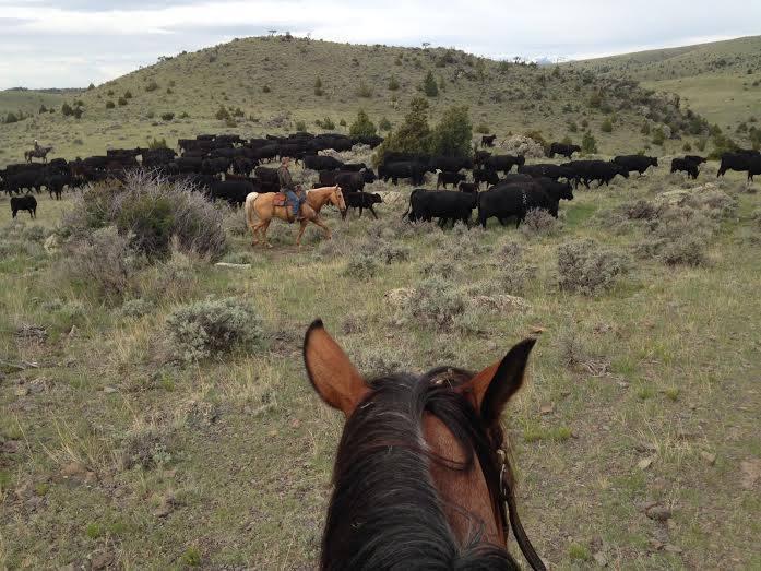 WMR Herd II.jpg
