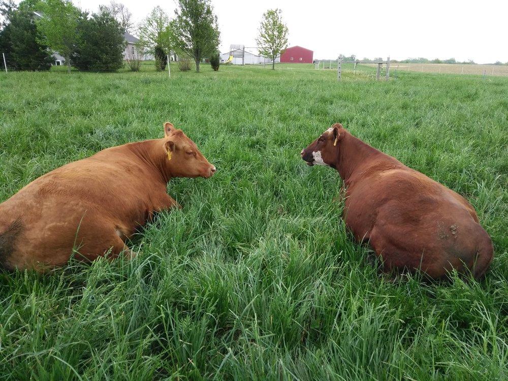 Sonrise Farms Beef