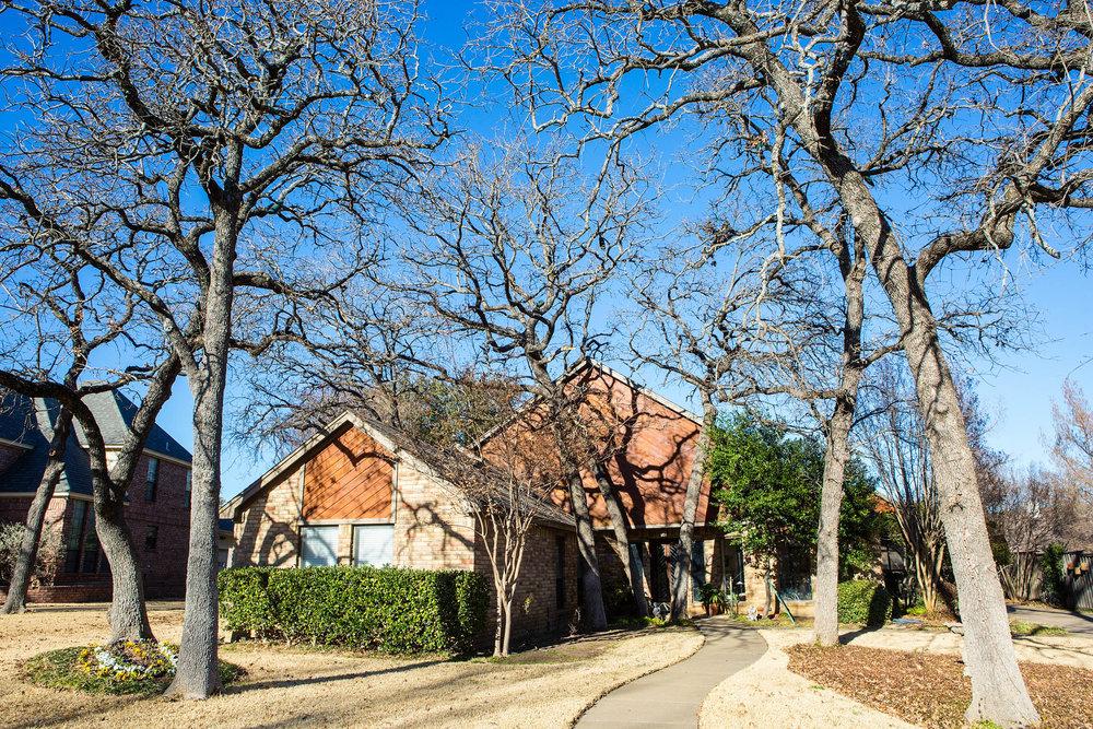 Tree Trimming in Southlake Texas (1 of 8).jpg