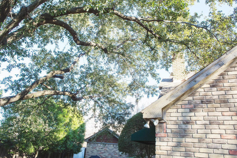 Tree Trimming in Southlake Texas (3 of 8).jpg