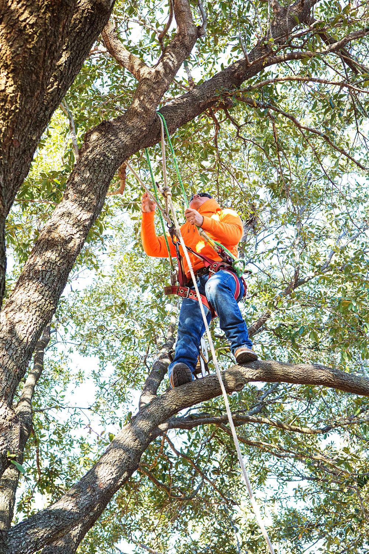 Tree Trimming in Southlake Texas (4 of 23).jpg