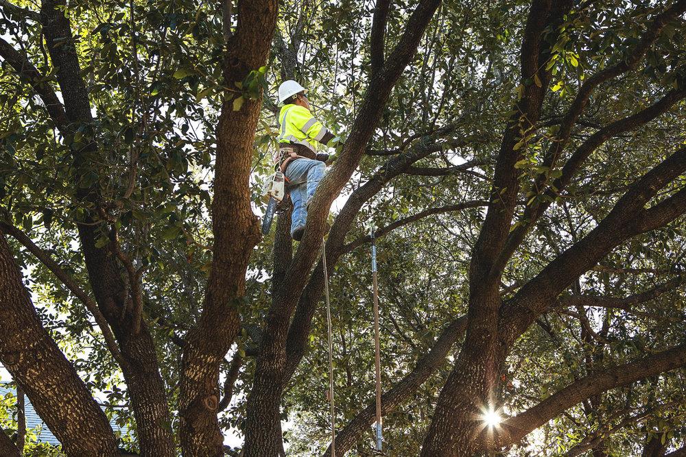 Tree Trimming in Southlake Texas (7 of 23).jpg