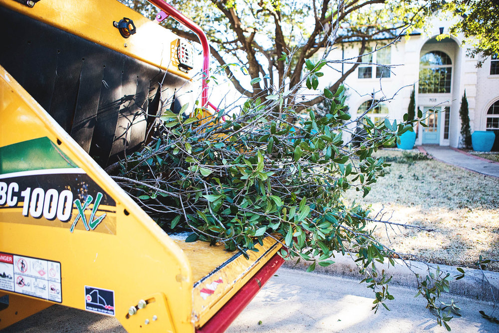 Tree Trimming in Southlake Texas (16 of 23).jpg