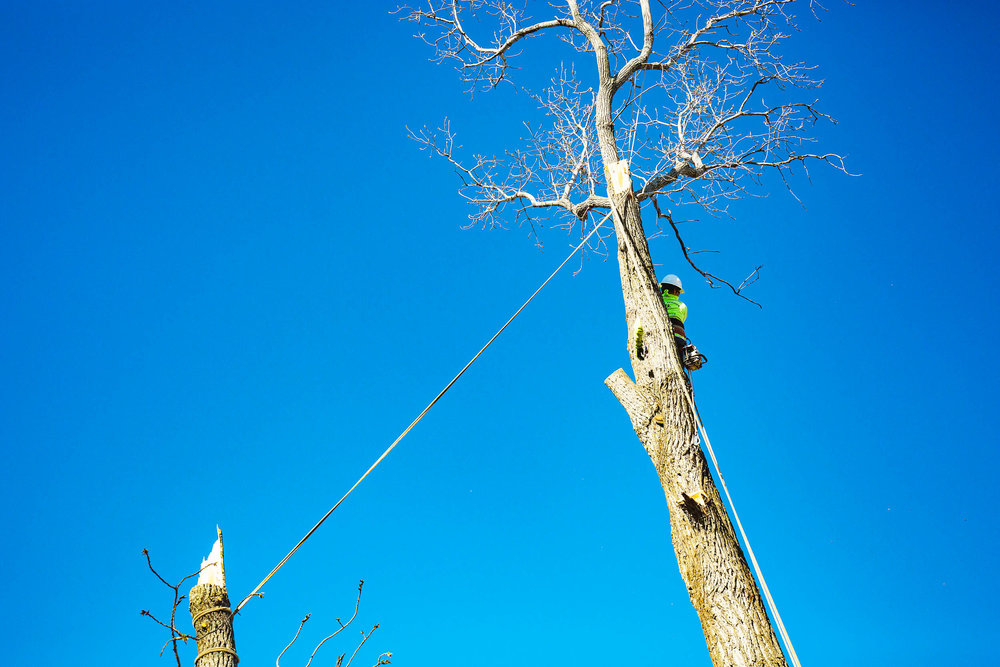 Tree Trim Service in keller Texas (19 of 49).jpg