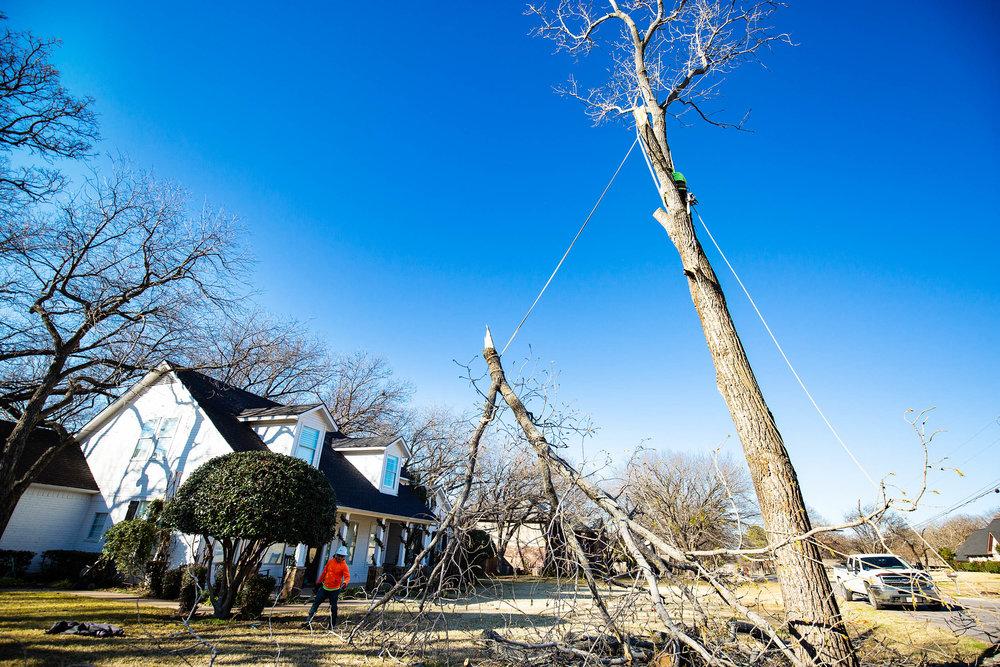 Tree Trim Service in keller Texas (22 of 49).jpg
