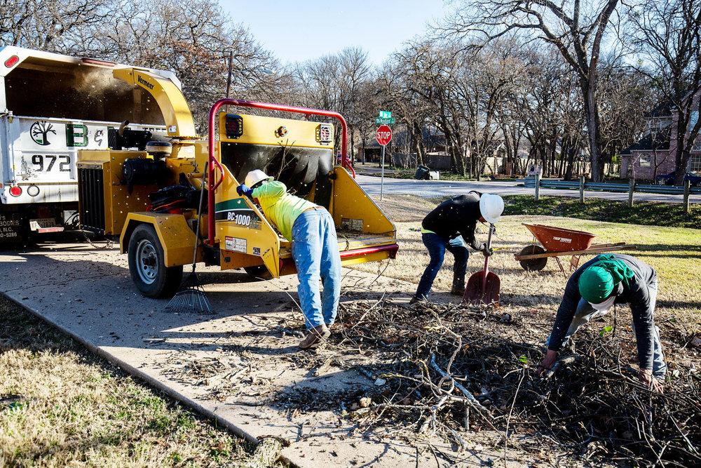Tree Trim Service in keller Texas (35 of 49).jpg