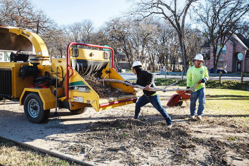 Tree Trim Service in keller Texas (39 of 49).jpg