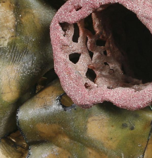 Wallflower, detail