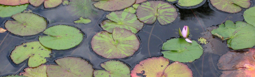 testimonials-lotuses.jpg