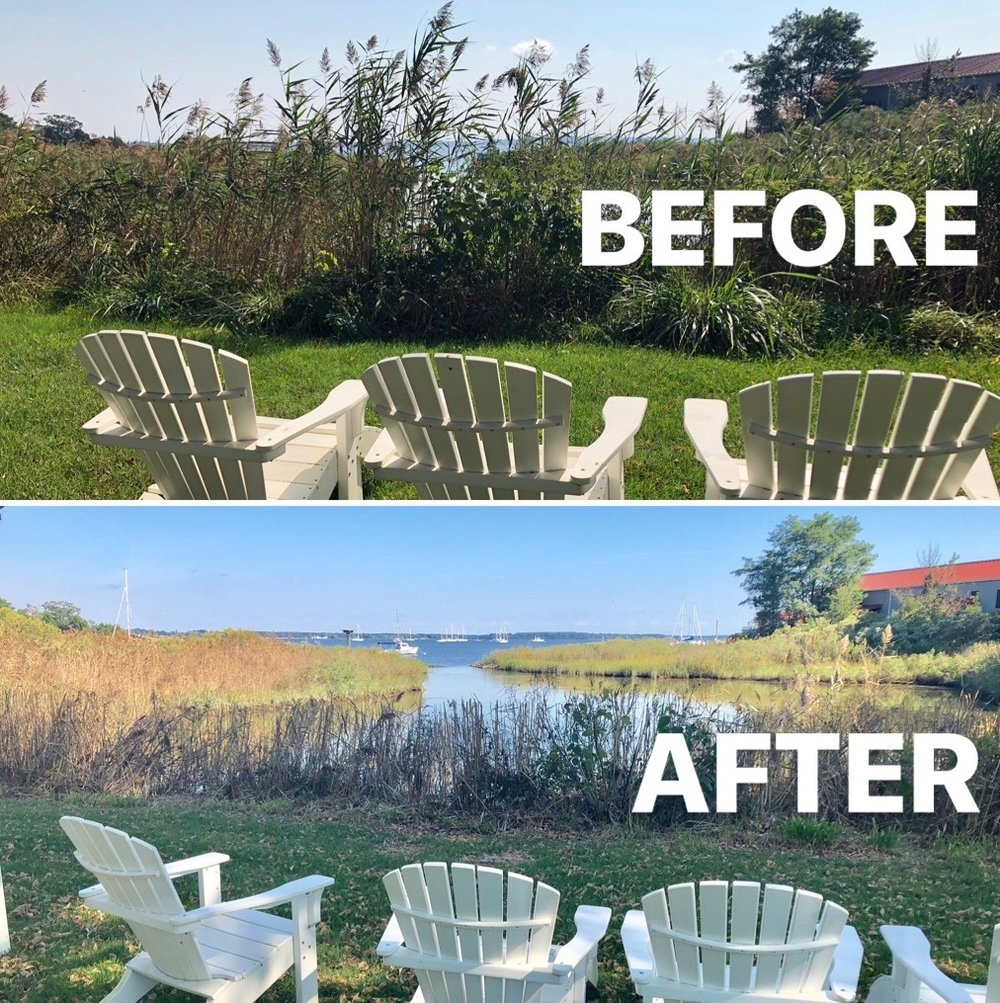 Shoreline Management - Invasive weeds such as phragmites are difficult to control, degrade natural habitats and block beautiful water views. Reclaim your shoreline today by joining our shoreline management program!