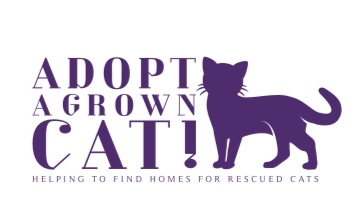 Adopt a Grown Cat!