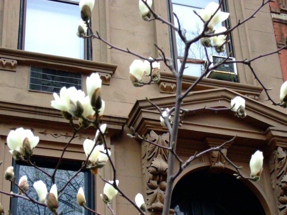 magnolia_447875986_o.jpg