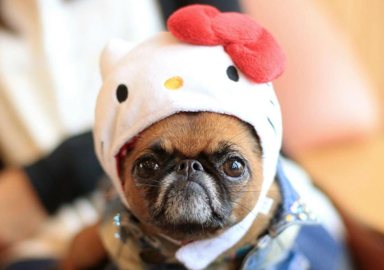 292baa9fb These Adorable Pets Love Hello Kitty, Too! — HK Heaven