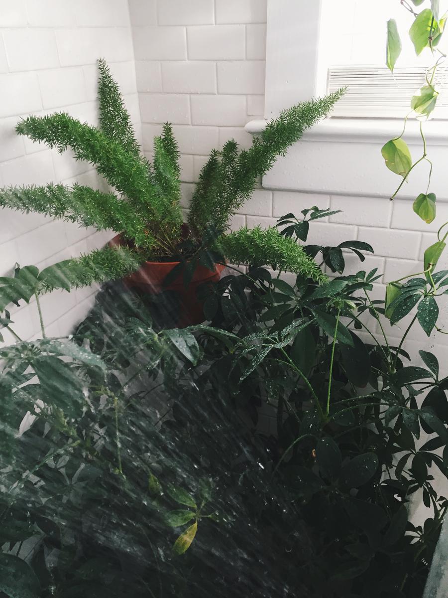 brookecourtney_showeryourplants-5.jpg