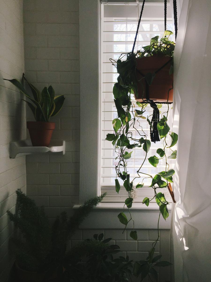 brookecourtney_showeryourplants-4.jpg