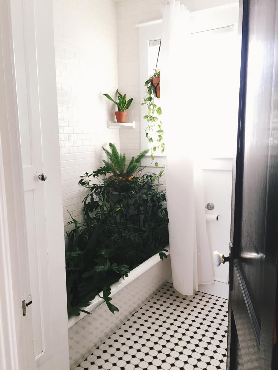 brookecourtney_showeryourplants-1.jpg