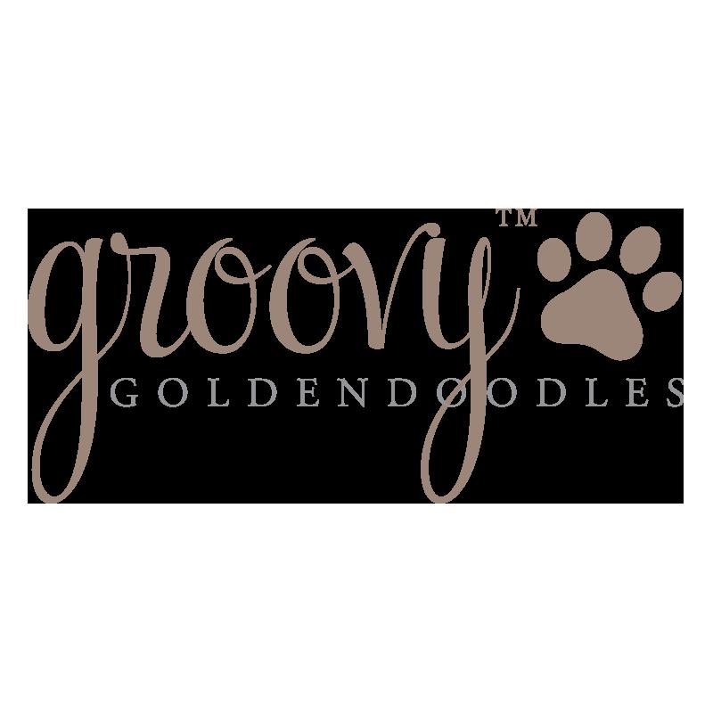 Groovy Golden Doodle