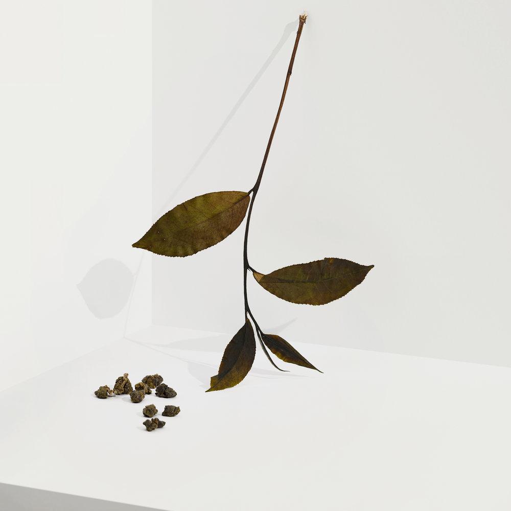 Cocoon Tea Artisans -