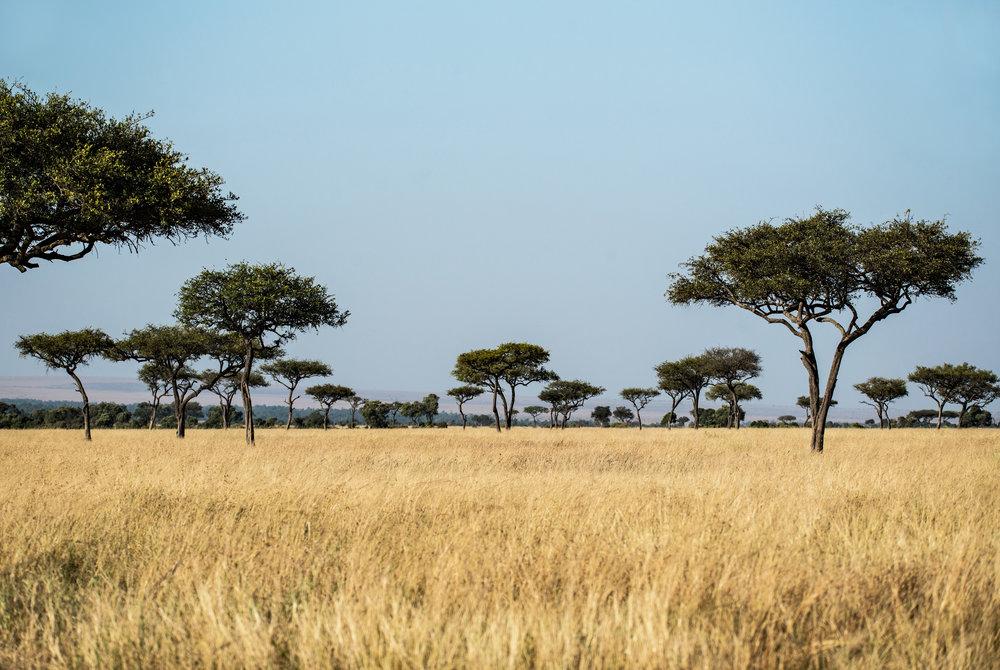 Tour Packages & Safaris -