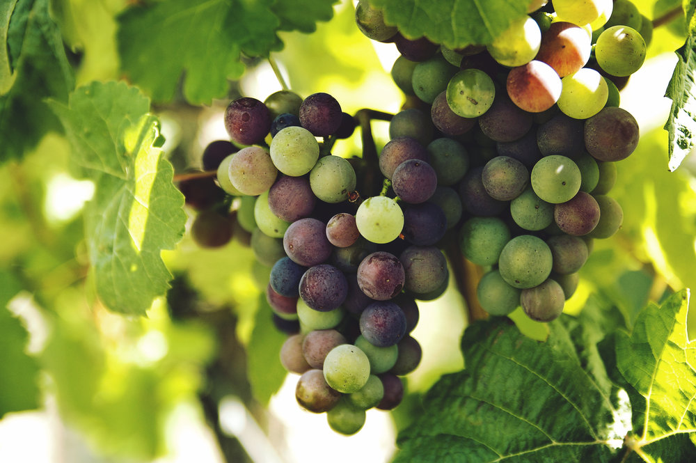 grapes - Grapes contain an average of five pesticide residues.More than 96 percent of conventional grapes test positive for pesticide residues.