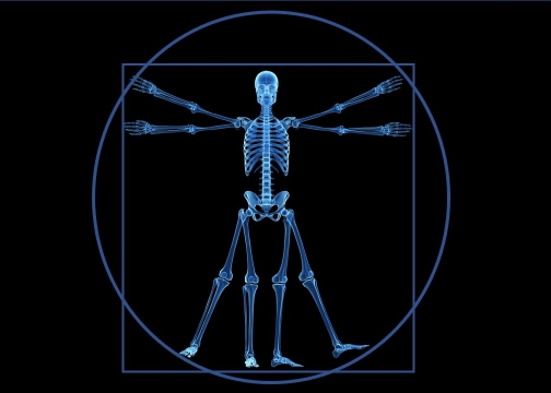 Vitruvian Skeleton